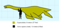 Cryptoclidus scale.png