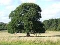 Cuerden valley tree - geograph.org.uk - 229083.jpg