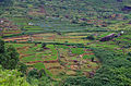 Cultures vivrières région de Nuwara Eliya.jpg