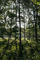 Dülmen, Naturschutzgebiet -Am Enteborn- -- 2014 -- 0198.jpg