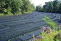Daio wasabi farm08s1920.jpg