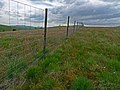 Deer fence - geograph.org.uk - 1370597.jpg