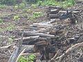 Degradação Florestal Amazônia 13.jpg