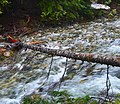 Denny Creek log II - panoramio.jpg