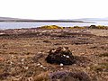 Derreens Island - geograph.org.uk - 1851779.jpg