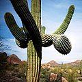 Desert living (15114063248).jpg