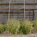 Detail middelste compartiment van vervallen muurkas - Vogelenzang - 20406351 - RCE.jpg