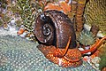 Diorama of a Devonian seafloor - gastropod, corals, algae 1 (30717352317).jpg