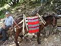 Donkey..JPG
