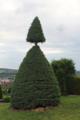 Doppelkegelbaum Bad Hersfeld09062019.png