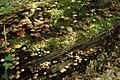 Draved-Skov-nedbrydning9.jpg
