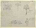 Drawing, Botanical sketches, 1853 (CH 18202489).jpg