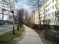 Dzierzoniow, Poland - panoramio - lelekwp (38).jpg