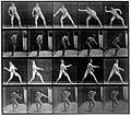 "E. Muybridge ""Animal locomotion"", plate Wellcome L0018588.jpg"