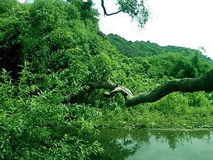 Srungavarapukota - Eastern Ghats at Srungavarapukota