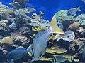 Eilat Coral World Underwater Observatory 30.jpg
