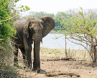 Majete Wildlife Reserve wildlife reserve in Malawi