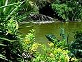 Embalse Dos Bocas de Utuado, Puerto Rico - panoramio (3).jpg