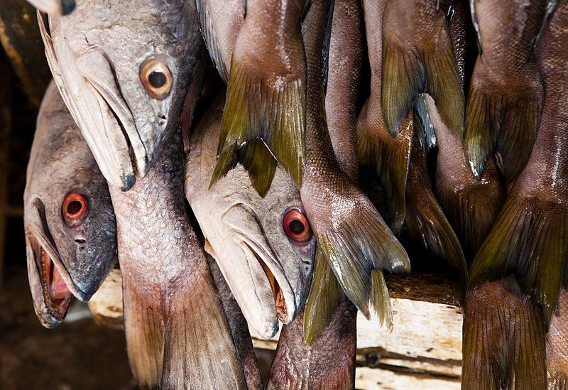 File:Ensenada fish market 2.jpg