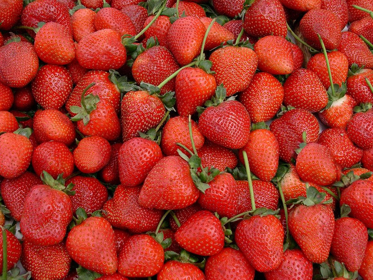 Erdbeeren Wikipedia