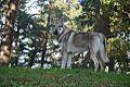 Eska der Tschechoslowakische Wolfhund und der Herbst 5.jpg