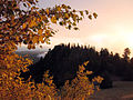 Evening light on the Aspens (22014291848).jpg