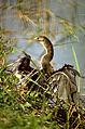 Everglades National Park EVER1494.jpg
