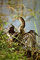Everglades National Park EVER1494.jpg