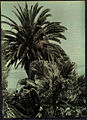 Exotic Tree in Madeira, by Sarah Angelina Acland, c.1910.jpg