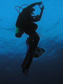 Physiological responses to diving in the amphibia.