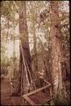 FAHKAHATCHEE STRAND OF CYPRESS IN BIG CYPRESS BEN, A NATIONAL HISTORIC SITE - NARA - 544632.tif