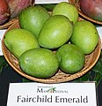 Fairchild Emerald mango.jpg