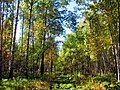 Fall in a forest in the Urals.jpg
