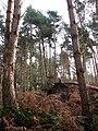 Fallen trees - geograph.org.uk - 639276.jpg