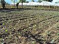 Farming at Kaski.JPG
