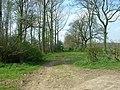 Farmtrack Through Wood - geograph.org.uk - 1256577.jpg