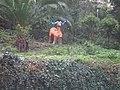 Fauna salvaje en sintra - panoramio.jpg