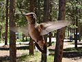 Female Ruby-Throated Hummingbird in Flight.jpg