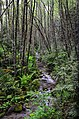 Fern Creek - panoramio.jpg