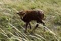 Fertoe-Hansag-Nationalpark 18.JPG
