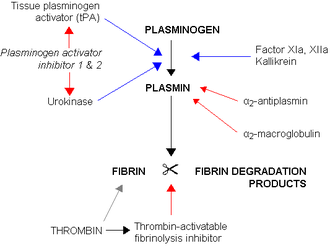Tissue plasminogen activator - A simplified illustration demonstrates clot breakdown (fibrinolysis), with blue arrows denoting stimulation, and red arrows inhibition.