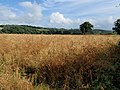 Field near Gappah - geograph.org.uk - 908017.jpg