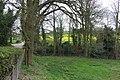 Fields near Compton, Staffordshire - geograph.org.uk - 398795.jpg