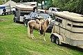 Fiestas Patrias Parade, South Park, Seattle, 2015 - preparing the horses 09 (21365329239).jpg