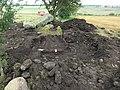 Firse sten (Raä-nr Falköpings Östra 1-1) utgrävning-08 1353.jpg
