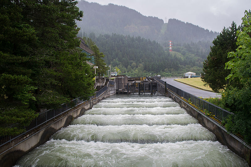 File:Fish Ladder, Bonneville Dam-2.jpg