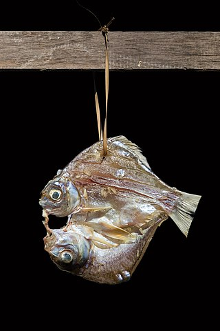Fish hanging in the sun with black background.jpg