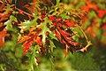 Flickr - law keven - Autumnal Bokeh....jpg