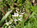 Flora (13) (30051021147).jpg