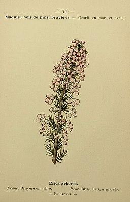 Flore coloriée de poche du littoral méditerranéen de Gênes à Barcelone y compris la Corse (6244463968)